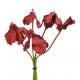 Cyclamen Bund, 5 stems, length 35cm, red